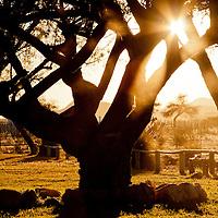 Namibian sunset through winter trees