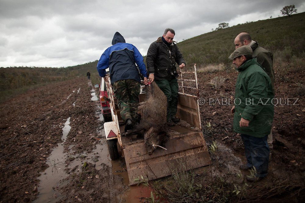 Hunters pull a dead wild boar into the car's trailer after hunting near Carbajo on January 19 2013, in Caceres Province, Extremadura, Spain. .Caceres has a well preserved natural environment. Plenty of its surface is dedicated to deers and wild boars hunting, making this, an important part of its economy. But most of the land belongs to large landowners. .In Carbajo, people gather three times a year to hunt deers and wild boars. In the past, they used to hunt for eating, but now days, they practice it as an sport and a social event. Then, they sell what the catch as wild game meat.