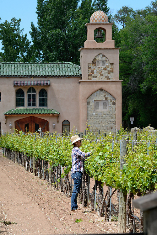 jt051817a/ a sec/jim thompson/ Carrie Gurule, Assistant Wine Maker for Casa Rondeñia checks out the Riesling grapes on the Estate in the North Valley. Thursday May. 18, 2017. (Jim Thompson/Albuquerque Journal)