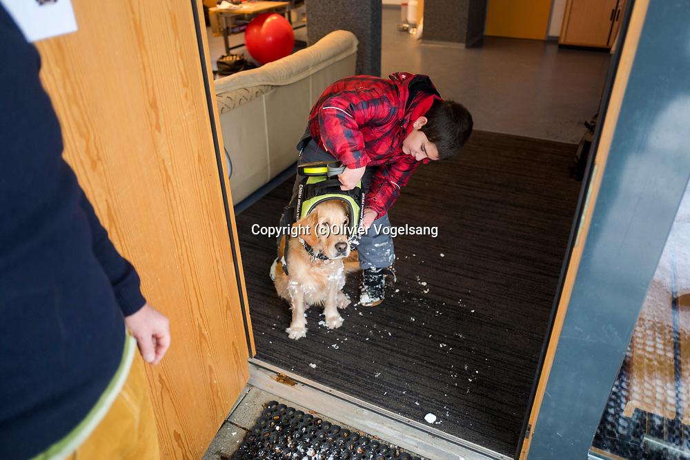 Saint-Cergue, décembre 2017. reportage dans une école spécialisée à St-Cergue, dans laquelle un chien scolaire est utilisé depuis le début de l'année pour venir en aide et calmer les élèves. C'est le premier chien à être utilisé de la sorte en Suisse romande. Rentrée de promenade pour Tahiti. © Olivier Vogelsang