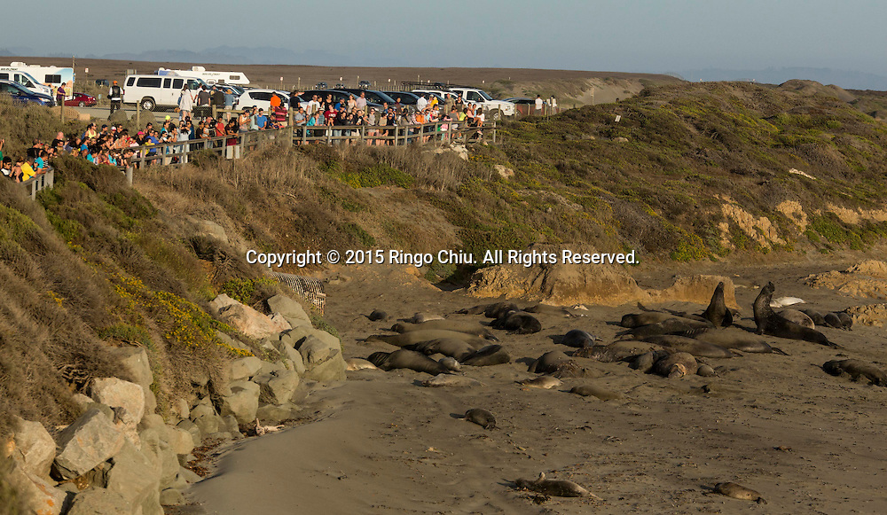 People watch the elephant Seals on a beach at Piedras Blancas near San Simeon California Coast in San Simeon, California, the United States, Sunday, August. 16, 2015. In 1990, just under two dozen elephant seals were seen on the beach just south of the Piedras Blancas lighthouse. Then their migration pattern began to extend decisively. The next spring, more than 400 seals were counted. After that, the population continued to grow every year. Now about 17,000 elephant seals call this beach their home. While seals can usually be seen at the beach all year long, the best times to visit are during late January, April and October.Photo by Ringo Chiu/PHOTOFORMULA.com)