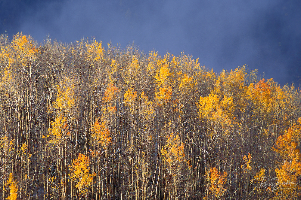 Fall aspens and rising mist in the San Juan Mountains, Uncompahgre National Forest, Colorado