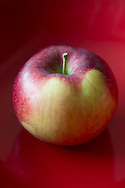 McIntosh Apple, Malus domestica, red green yellow, with red background