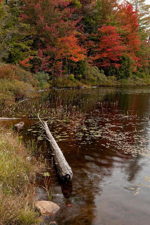 Fall Foliage Old Forge NY