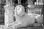 Lion statue at the entrance to the Arsenal, Venice, Veneto, Italy