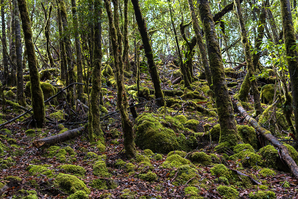Forest floor covered with moss and tree branches