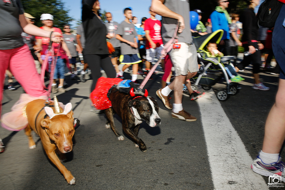 Pets were allowed to join in on the fun with more than 4,000 participants during the 2014 Silicon Valley Heart & Stroke Walk at KLA-Tencor in Milpitas, California, on October 11, 2014. (Stan Olszewski/SOSKIphoto)