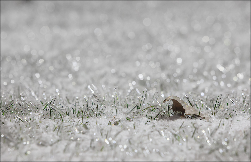 Single leaf frozen in green grass covered with a quarter inch of ice.