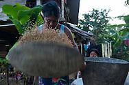 Mujeres Embera durante pilado y limpieza del arroz.  Comunidad indígena La Chunga, Comarca Embera – Wounaan en la Provincia de Darién, Panamá.  La Chuga, ubicada en el  Rio Sambu, forma parte del corredor biológico de Bagres con sus inmensos bosques tropicales.
