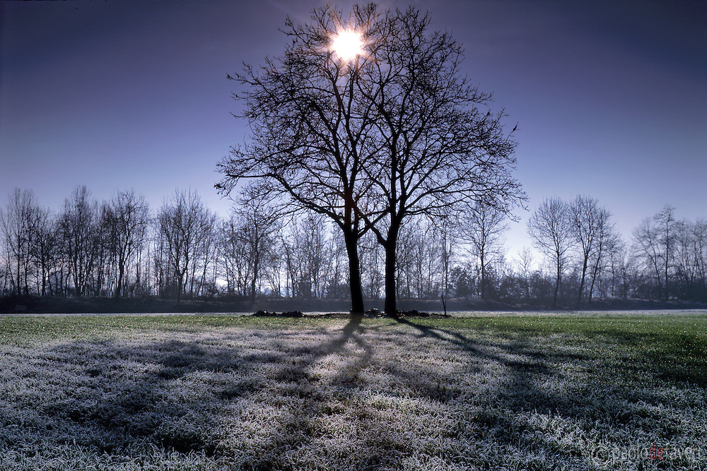 A pair of backlit trees and frost covered fields in the country side nearby Carignano in Piedmont, Italy. Taken on a cold morning of December