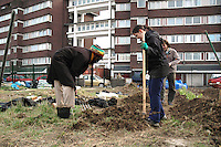Preparing soil and planting vegetables in inner city urban garden allotment.