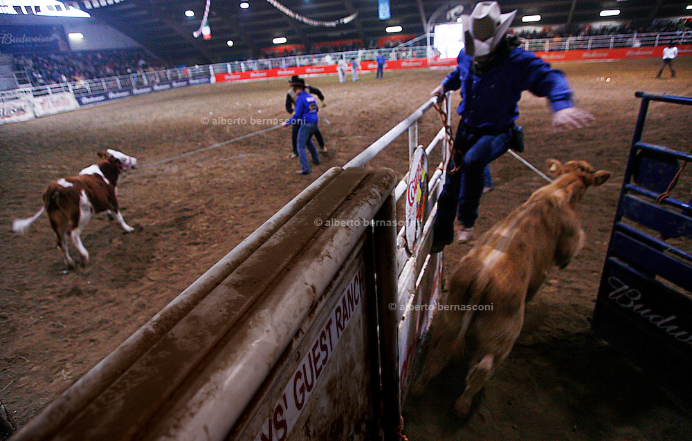 Italy, Voghera, Cowboys ranch: calf roping Cowboys show and conetst.  .Cowboys show and contest.