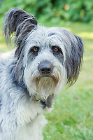 Portrait of a mixed breed dog&#xA;<br />
