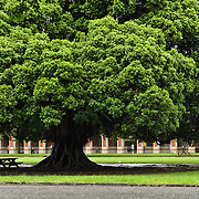 Banyan at Cheng Kung University, Tainan, Taiwan