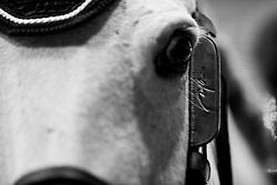 Eyes<br /> Laiterie de Montaigu Trophy<br /> Longines Masters Paris 2016<br /> © Hippo Foto - Cara Grimshaw