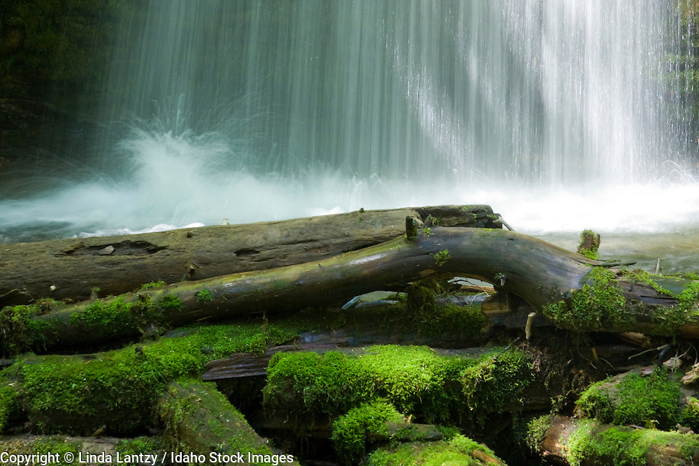 The base of Shadow  Falls on Yellowdog creek, Coeur D Alene ranger district, Idaho, USA