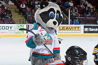 KELOWNA, CANADA - DECEMBER 4: Rocky Racoon played hockey with Initiation teams from Kelowna Minor Hockey play a mini-minor game during intermission at the Kelowna Rockets against the Medicine Hat Tigers on December 4, 2015 at Prospera Place in Kelowna, British Columbia, Canada.  (Photo by Marissa Baecker/Shoot the Breeze)  *** Local Caption *** KMHA; minor hockey; mini minor;