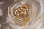 Rozen | Roses