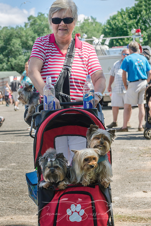 A woman carries her four Yorkshire terriers to the 66th annual Blessing of the Fleet in Bayou La Batre, Alabama, May 3, 2015. The first fleet blessing was held by St. Margaret's Catholic Church in 1949, carrying on a long European tradition of asking God's favor for a bountiful seafood harvest and protection from the perils of the sea. The highlight of the event is a blessing of the boats by the local Catholic archbishop and the tossing of a ceremonial wreath in memory of those who have lost their lives at sea. The event also includes a land parade and a parade of decorated boats that slowly cruise through the bayou. (Photo by Carmen K. Sisson/Cloudybright)