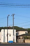 Strålningskadad jord är samlat under blå pressening i ett bostadsområde i Fukushima City, Japan