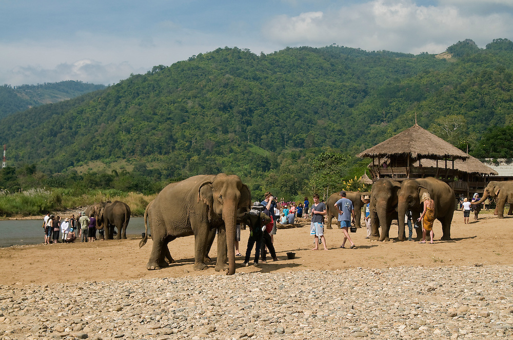 """Tourists and volunteers interact with the elephants at the Elephant Nature Park near Chiang Mai, Thailand.  Sangduen """"Lek"""" Chailert founded the park as a sanctuary and rescue centre for elephants.  The park currently has 32 elephants sponsored and supported by volunteers from all over the world."""