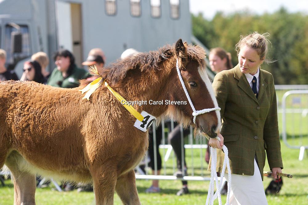 David Cosgrove's Hinton Annabel<br /> 1st Foal Class