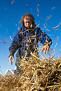 Sebastian Schnuelle, bib #31, spreads hay out for his dogs in the Kaltag check-point during the 2011 Iditarod Trail Sled Dog Race. hay, which is used as bedding, for his dogs in the Kaltag check-point during the 2011 Iditarod Trail Sled Dog Race.