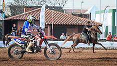 Cavalo Mangalarga vs. Moto