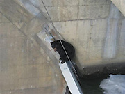 "14/04/2011<br /> Bear climbs On Dam<br /> It was a harrowing end, but officials who ordered a snip kill a bear stuck on a dam say they had no choice. Its a mystery just how the animal can to be precariously perches on a thin concrete wall at the dam in The Dalles, Oregon. The wall the bear became trapped on is called a spillway, and is very narrow with deep water both sides one 75 feet down. Workers from the U.S. Army Corps of Engineers at the dam called the Oregon Department of Fish and Wildlife, which sent a team of biologists to check out the bear. According to Army Corps of Engineers spokesman Scott Clemans, the ODFW biologists then called in police officers. Since this isnt a common occurrence at the dam, they all brainstormed ideas of how to handle the bear.\nAfter talking it over, they came to the conclusion there was no way to rescue the bear without putting someone at considerable risk. The bear was stuck in an isolated part of the dam and it would be too risky for anyone to safely reach it, said ODFW spokesman Rick Hargrave. The biologists also thought if they tranquillised the bear for a rescue there was a good chance it would tumble 75 feet down the downstream wall. If it survived the fall, they were concerned it would be injured and wander into a state park downstream of the dam. The bear was visibly under a lot of stress and was caught in some cables, Hargrave said. ""Collectively they decided the humane thing to do was to put the bear down because there was no safe way to rescue it and leaving it there was not an option,"" Hargrave said. ""It's unfortunate the bear had to die.""An Oregon State Police trooper fired and the bear fell into the water on the upstream side of the spillway, Hargrave said. After a while they lost sight of the bear in the water. Where the bear came from and how he ended up getting pulled down to The Dalles Dam were never going to know,¿ said Clemans. This time of year there is a lot of water flowing through the dam so juvenile salmon can get"