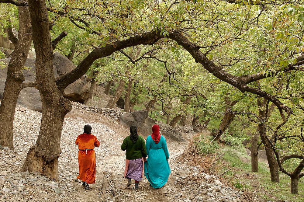 Berber women walking to  Imlil, Mizane Valley, Morocco