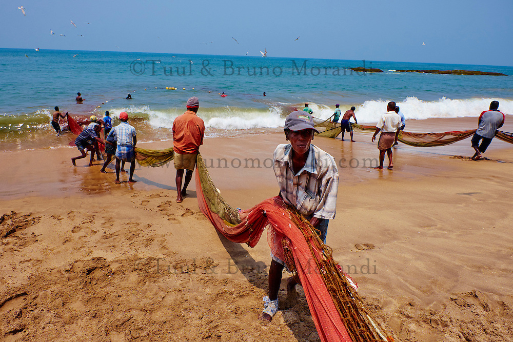 Sri Lanka, province du sud ouest, pêche à la senne à Bentota // Sri Lanka, West Coast, Bentota, seine fishing on the beach