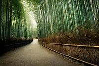 Arashiyama bamboo forest path, beautiful dreamy morning scenery in Kyoto, Japan.