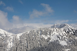 North America, United States, Washington,  Winter views of snow-covered trees, viewed from Crystal Mountain Ski Resort.