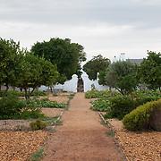 Path through Lemon trees to main house