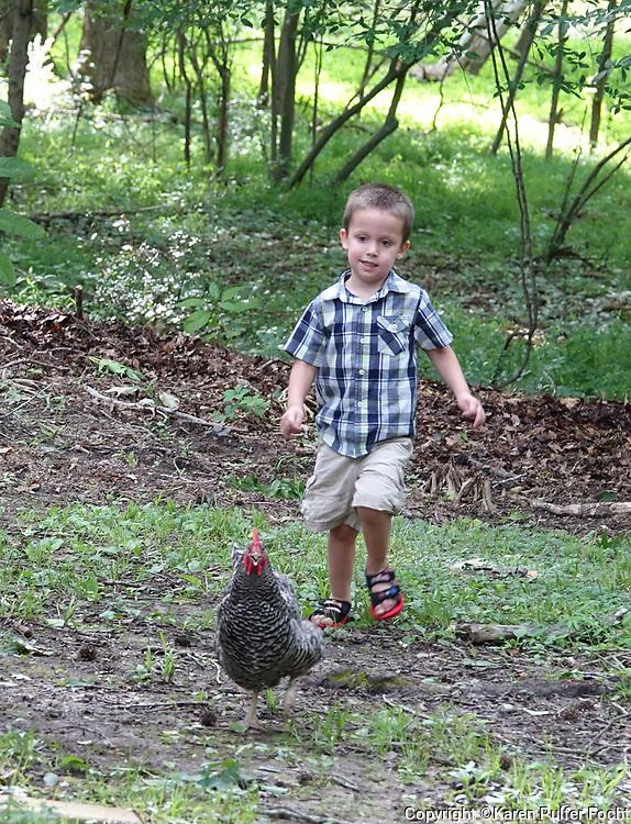 Chasing Chickens