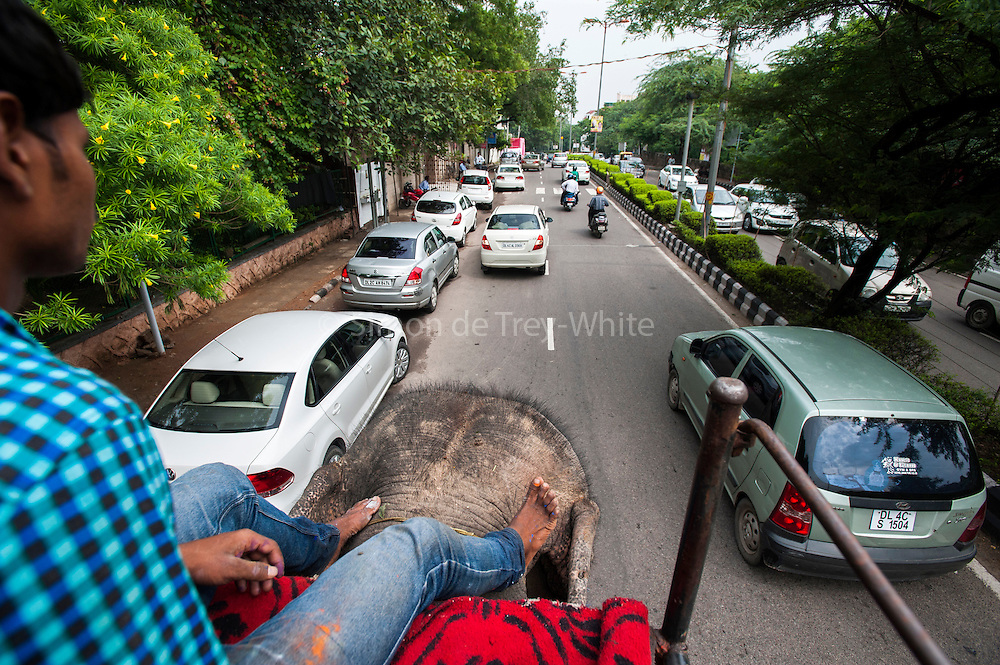 6th September 2014, New Delhi, India. A mahout steers his elephant with his feet as they walk through the city near New Rajinder Nagar, New Delhi, India on the 6th September 2014<br /> <br /> <br /> Elephant handlers (Mahouts) eke out a living in makeshift camps on the banks of the Yamuna River in New Delhi. They survive on a small retainer paid by the elephant owners and by giving rides to passers by. The owners keep all the money from hiring the animals out for religious festivals, events and weddings, they also are involved in the illegal trade of captive elephants.The living conditions and treatment of elephants kept in cities in North India is extremely harsh, the handlers use the banned 'ankush' or bullhook to control the animals through daily beatings, the animals have no proper shelters are forced to walk on burning hot tarmac and stand for hours with their feet chained together. <br /> <br /> PHOTOGRAPH BY AND COPYRIGHT OF SIMON DE TREY-WHITE<br /> + 91 98103 99809<br /> email: simon@simondetreywhite.com photographer in delhi