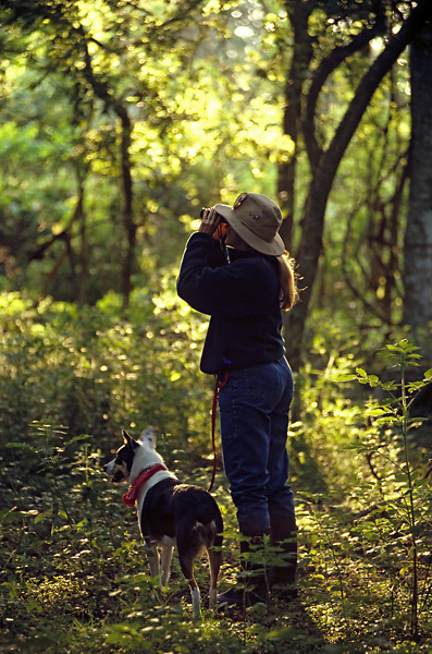 A backlit vertical of a  female bird watcher and their dog at the Audubon Smith Woods at High Island, Texas.