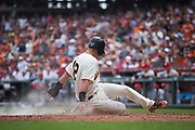 San Francisco Giants second baseman Joe Panik (12) slides into home plate to score a run against the St. Louis Cardinals at AT&T Park in San Francisco, California, on September 3, 2017. (Stan Olszewski/Special to S.F. Examiner)