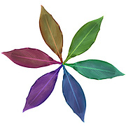 Digitally enhanced rainbow colored images of six leaves arranged in a circular design