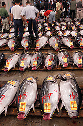 Tuna on display  at Tsukiji Fishmarket in Tokyo