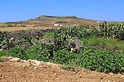Rural farming landscape view to hilltop Ta 'Gurdan, Gordan or Gordon lighthouse, Gozo, Malta