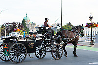 Downtown Victoria BC features colorful flower baskets along the streets. A horse-and-buggy travels along Wharf Street in front of the BC Legislature Buildings.