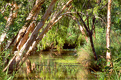 Paperbarks hang over the Barker River, a tranquil waterway on Mt Hart Station, now run as a wilderness lodge in a partnership between Taffy Abbotts and DEC.