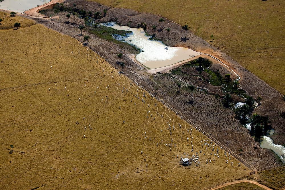 Cattle ranch in Mato Gross, Brazil, August 6, 2008. Daniel Beltra/Greenpeace