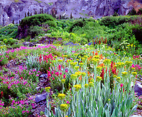 This natural garden of Colorado wildflowers in the Rocky Mountains made for a colorful photograph when I shot the large variety of flowers.