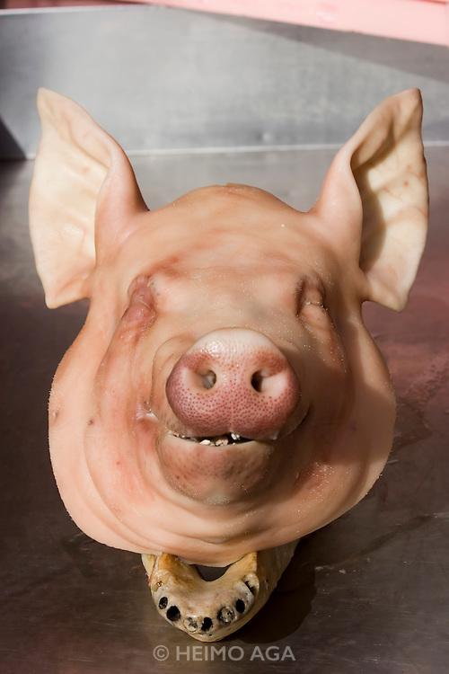 Jagalchi Fish Market. Pigs heads.