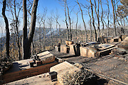 Huge forest fire rages on the Carmel Mountain South of Haifa. Kibbutz Beit Oren devastated by the flames. The cemetery as seen after the fire burnt out .