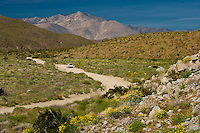 A vehicle drives the primative Coyote Canyon road in Anza-Borrego Desert State Park, in southern California, USA