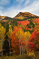 Utah's Wasatch Mountains provide stunning views of Fall colors.