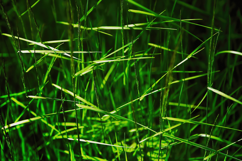I saw this grass which reminded me of the old scythes<br /> that would be used to cut it back in the old days.